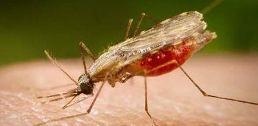 Ações intensificam combate à malária na Amazônia