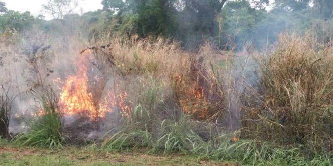 Mulher é presa pela PRF colocando fogo nas margens da BR 050 em Catalão-GO